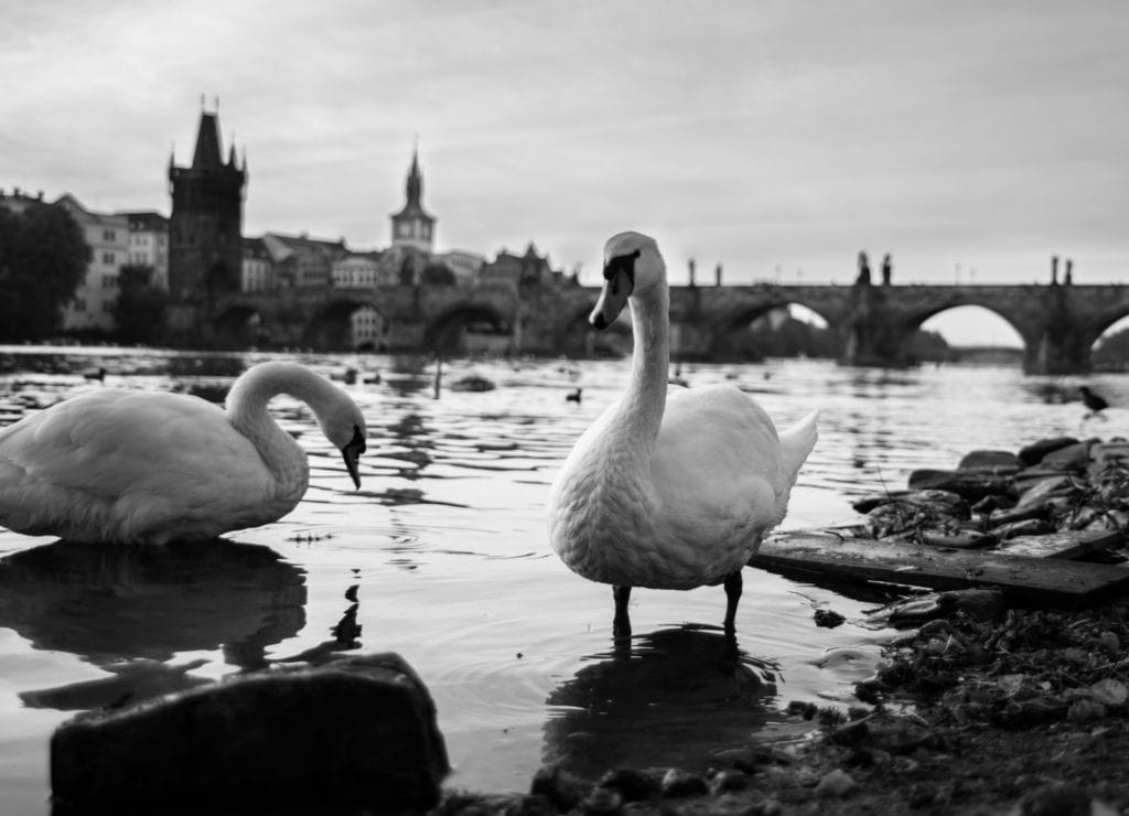 Streetphotography Prague #ludovica #spontanefotografie #blackwhite #belgianphotographer #antwerpphotographer #straatfotografie #streetphotography #bnw #monochrome #ig_streetphotographer #beststreets #streetphoto #street_photographer #nikon #prague #karelsbrug #moldau